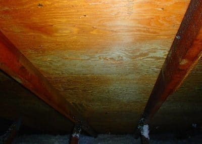Mold Remediated Springfield